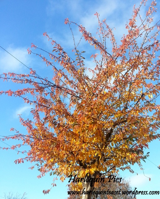 Gotta love the orange ombre hues on this tree.